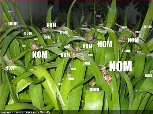funny-pictures-nom-snails