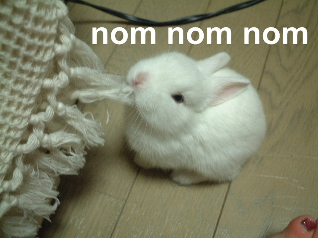 nomnomnom