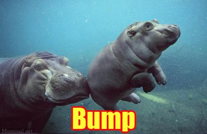 bump11