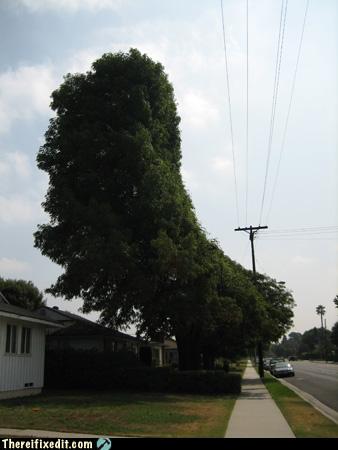 fixatree