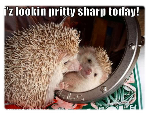 funny-pictures-hedgehog-looks-prett