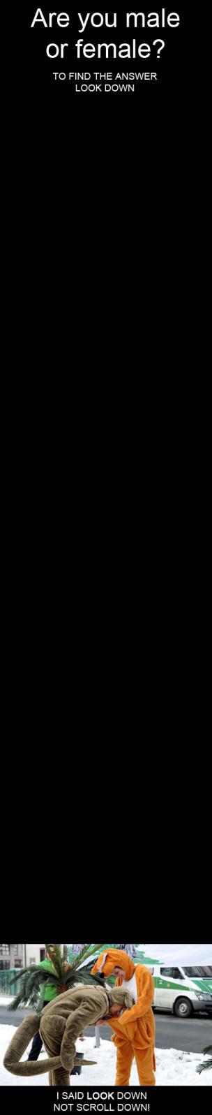 maleorfemale