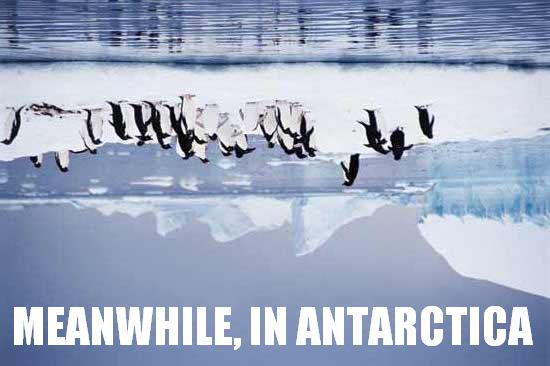 meanwhile_in_antarctica-14219