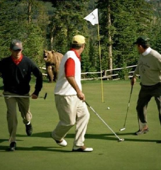 bear-golf-494