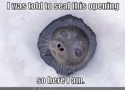 funny-pictures-seal-seals-an-opening