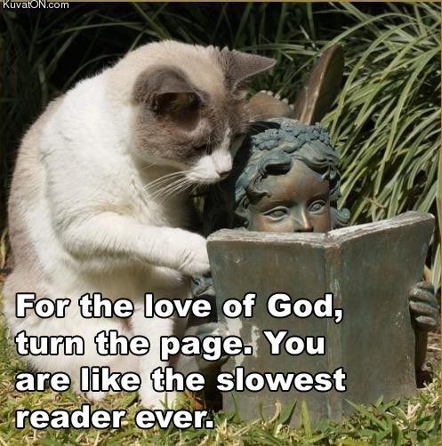 reader_cat