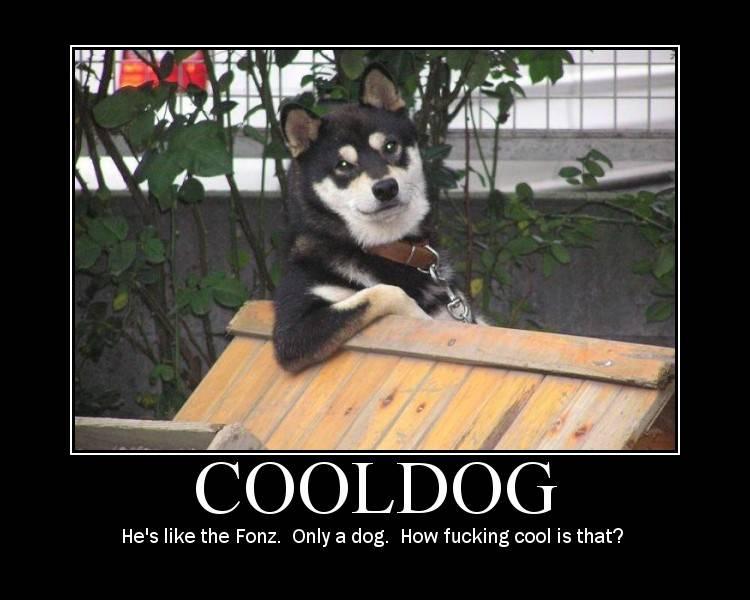 cool-dog