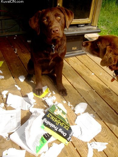 dog_training_for_dummies