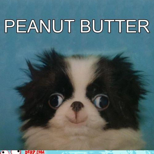 hurr-durr-derp-face-peanut-bhurrrdhurrr