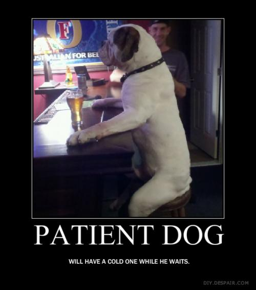 patient dog.thumbnail