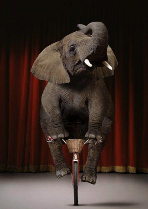 Funny-circus-elephant
