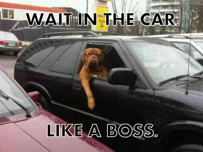 wait in the car like a boss