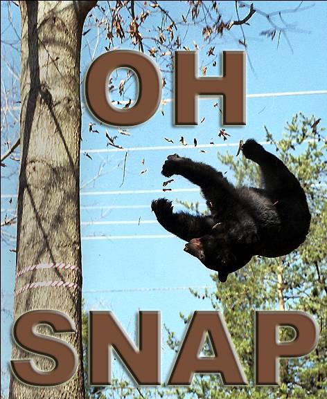 73189-Misc-OhSnap_Bear