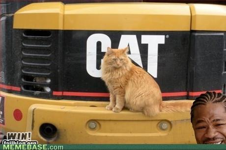 internet-memes-cat-on-cat-win