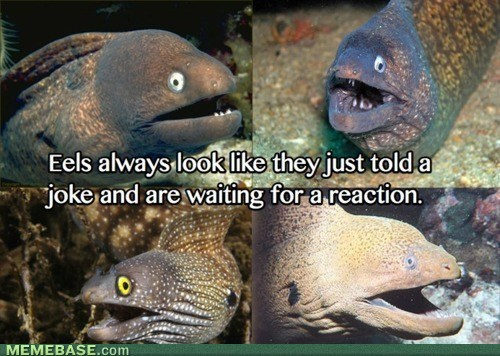 internet-memes-fishing-for-compliments