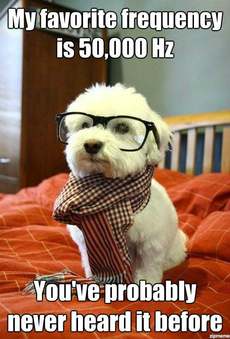 hipster-dog-favorite-frequency