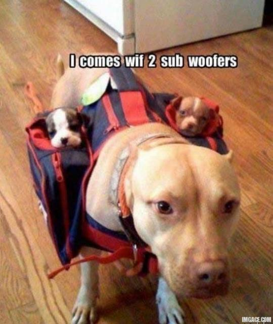 two-subwoofers-pitbull