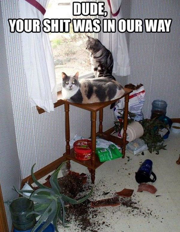 Cat+s+World_a8f9bf_4390677