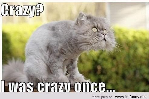 Crazy+cat.+Crazy+cat+http+imfunny.net+crazy-cat-omg-what-a-face_016315_4366398