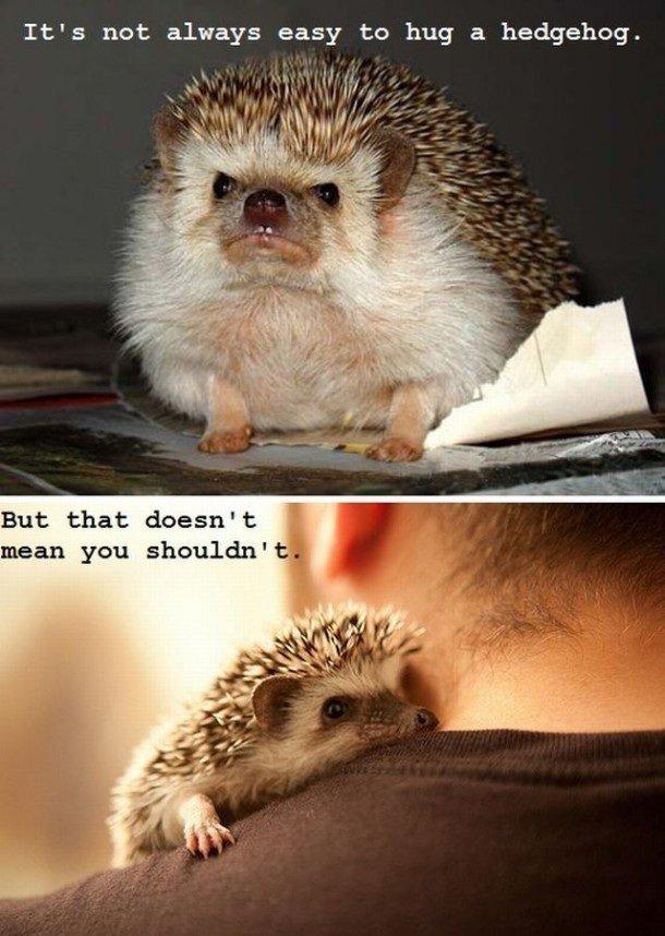 hedgehog_c70644_4501263