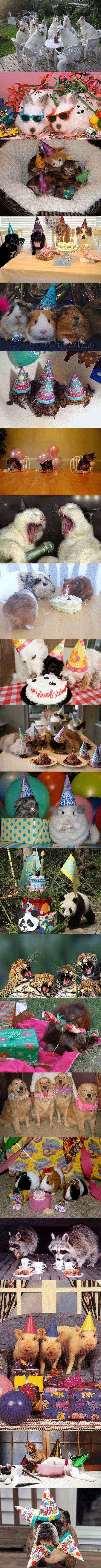 party+animals_54dc68_4476366