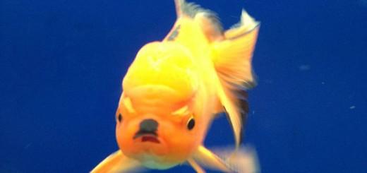 Hitler+Fish.+Sourcin+Shit+http+www.livememe.com+mu7y81_139baa_5069099