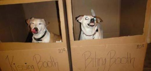 kissing-booth-biting-booth