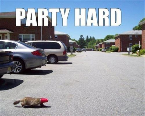 party-hard