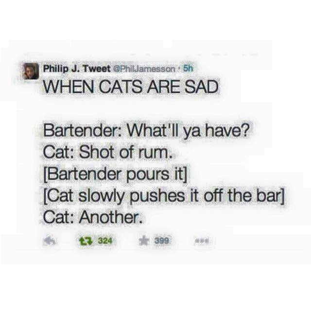 Cat+goes+to+a+bar_fe9699_5587997