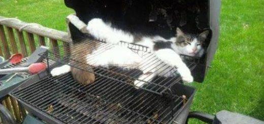 Funny-cat-picture-I-got-stuck