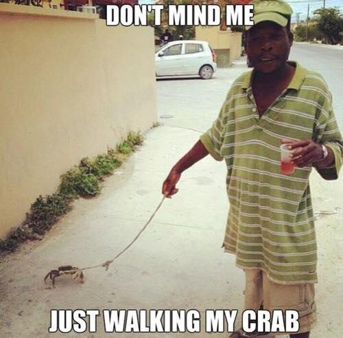 pet-crab
