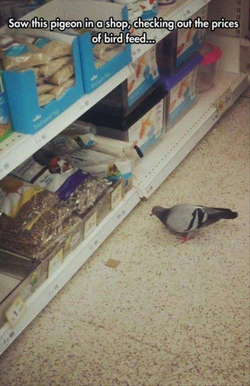 pigeom-shopping